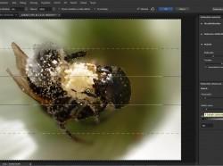 Photoshop CS6: Fotográfiai életlenítési galéria